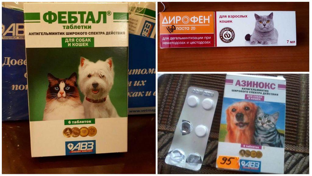 Таблетки от глистов для кошек, какие лучше