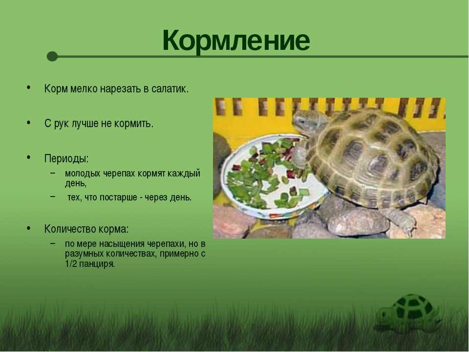 Что ест черепаха в домашних условиях. чем кормить черепаху?