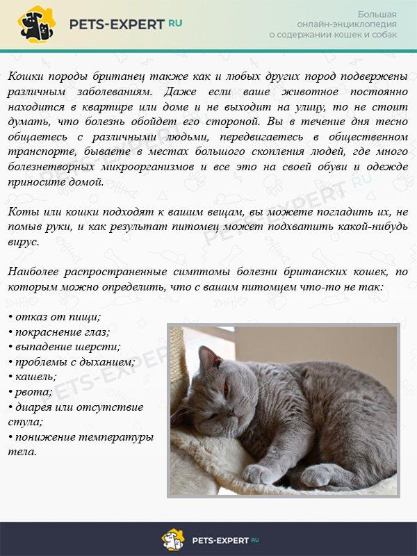 Почему у кота текут слюни изо рта: причины и лечение в клинике зоостатус