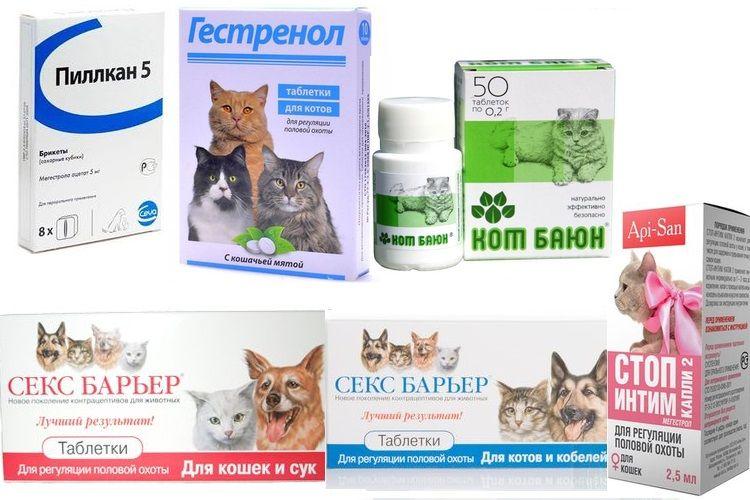 Успокоительное и снотворное для кошек: виды препаратов, их действие и цены