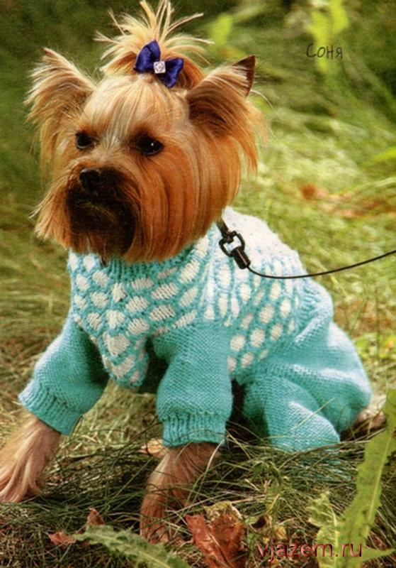 Одежда для собак своими руками для начинающих