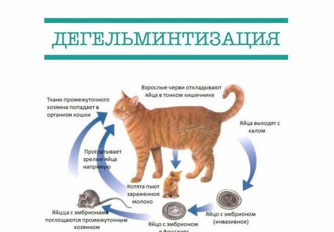 Как вылечить острую почечную недостаточность у кошек