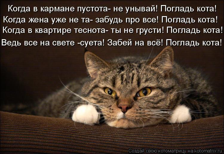 Почему кошки приносят вам своих котят?