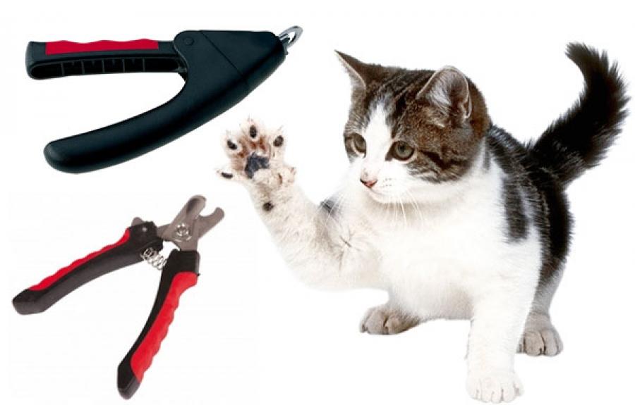 Ножницы для стрижки собак: обзор профессиональных филировочных ножниц и закругленных. какие ножницы лучше выбрать для груминга собак?