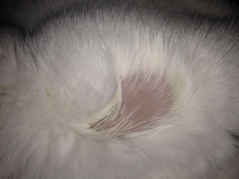 Что делать если у кота сильно лезет шерсть народные средства