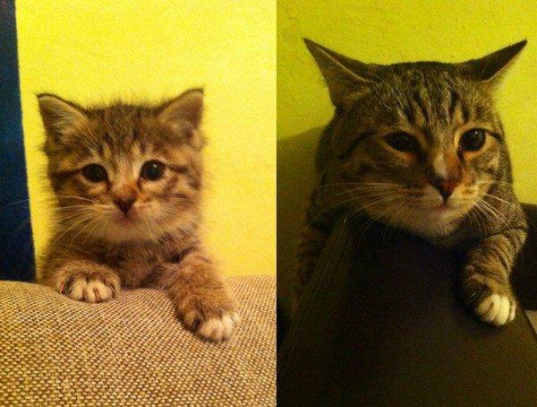 Возраст, когда котенок считается все еще котенком