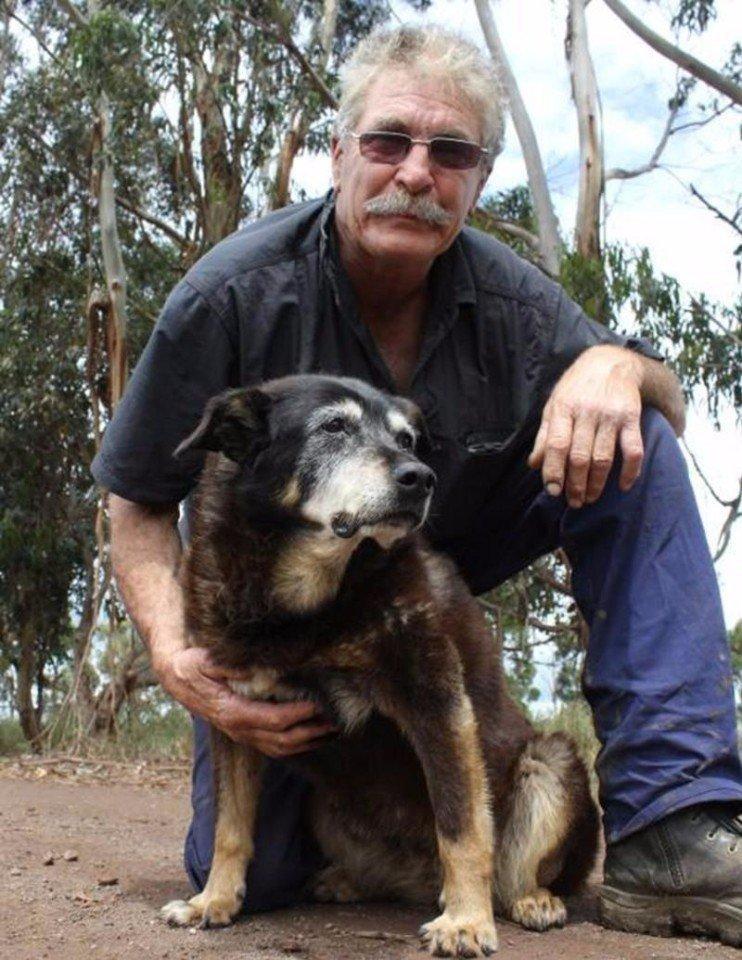Самая старая собака в мире | фото, книга рекордов