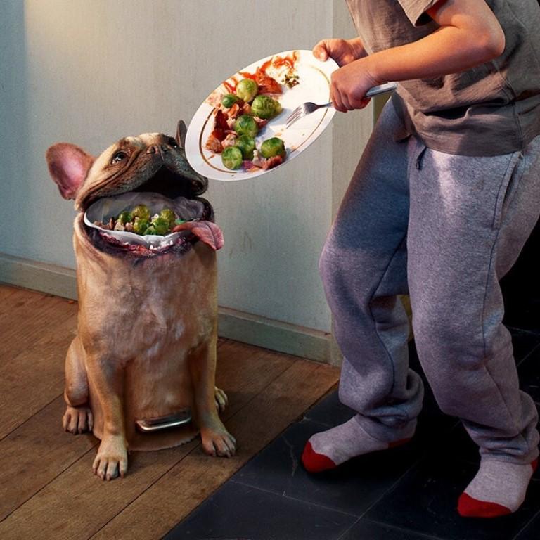 Собаки: чем кормить на натуралке, примеры меню по дням, запрещенные продукты