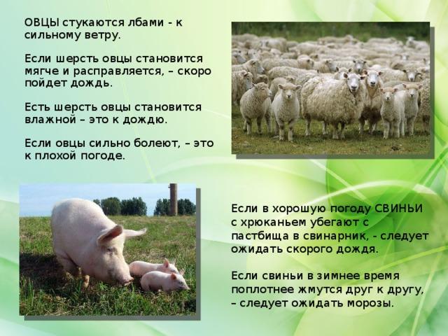 Предсказание погоды по животным