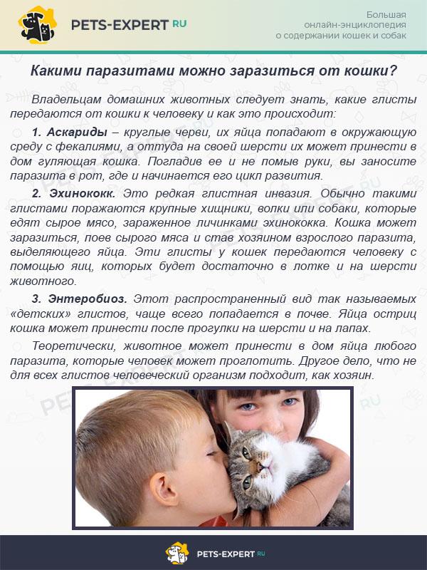 """Способы передачи и профилактика заболеваний, передающихся от собаки к человеку   блог ветклиники """"беланта"""""""