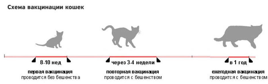 Прививка для кошки:???? какие вакцины нужны и в каком возрасте