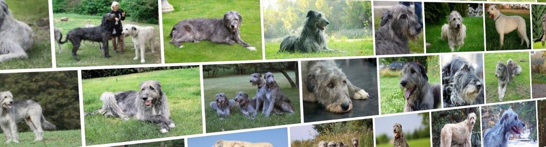 Собаки-долгожители: представители каких пород живут дольше всех - окружающий мир вокруг нас