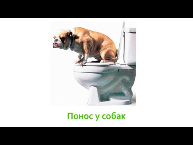 Запор у собаки