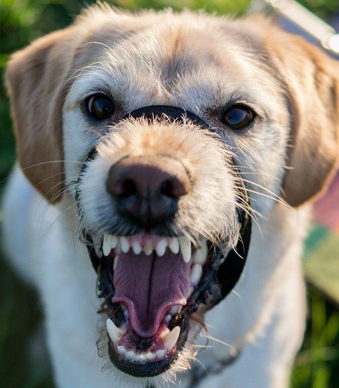 Какие мотивы у агрессии собаки? в чём причины? как исправить? (wolcha.ru)