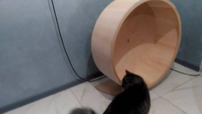 Колесо для спортивных кошек