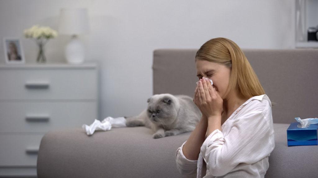 Как предотвратить аллергию на кошек – профилактика у взрослого и ребенка