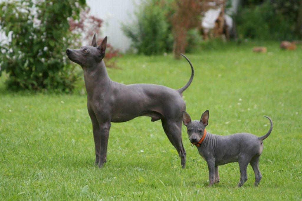 Терьеры – все породы собак (более 50 видов) с описанием, фото, характеристиками