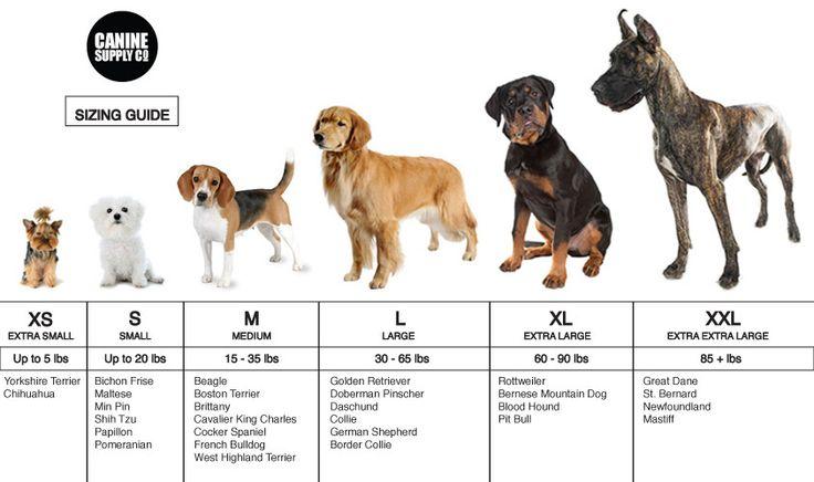 Топ 10 самых популярных и модных пород собак в россии и украине в 2021-2022 году: фото с названиями. самые модные породы маленьких и средних собак для квартиры 2021-2022 года