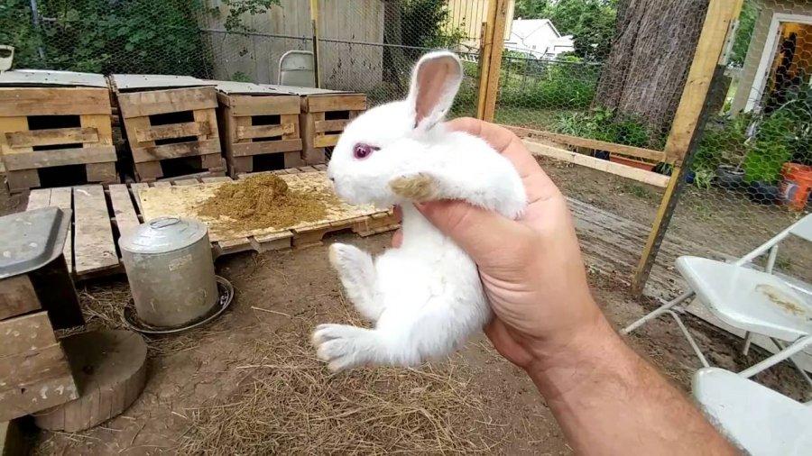 Выращивание и разведение кроликов в домашних условиях для начинающих кролиководов