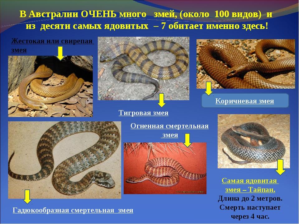 Виды змей, их названия и описание