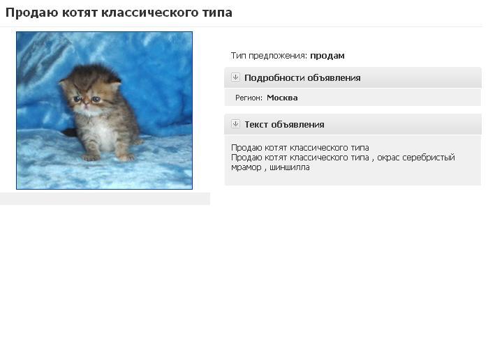 """Выбор котёнка у заводчика: всё, что нужно знать   блог ветклиники """"беланта"""""""