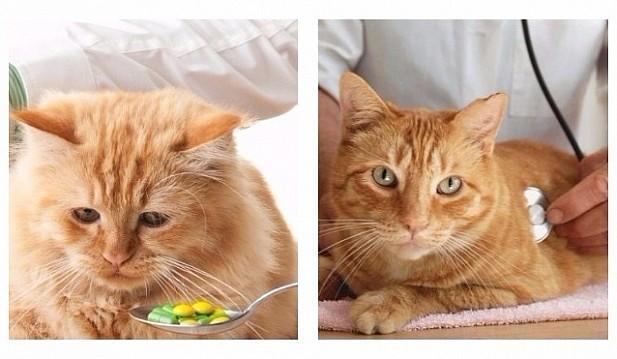 Аллергия у кошек: способы определения, методики лечения и профилактика