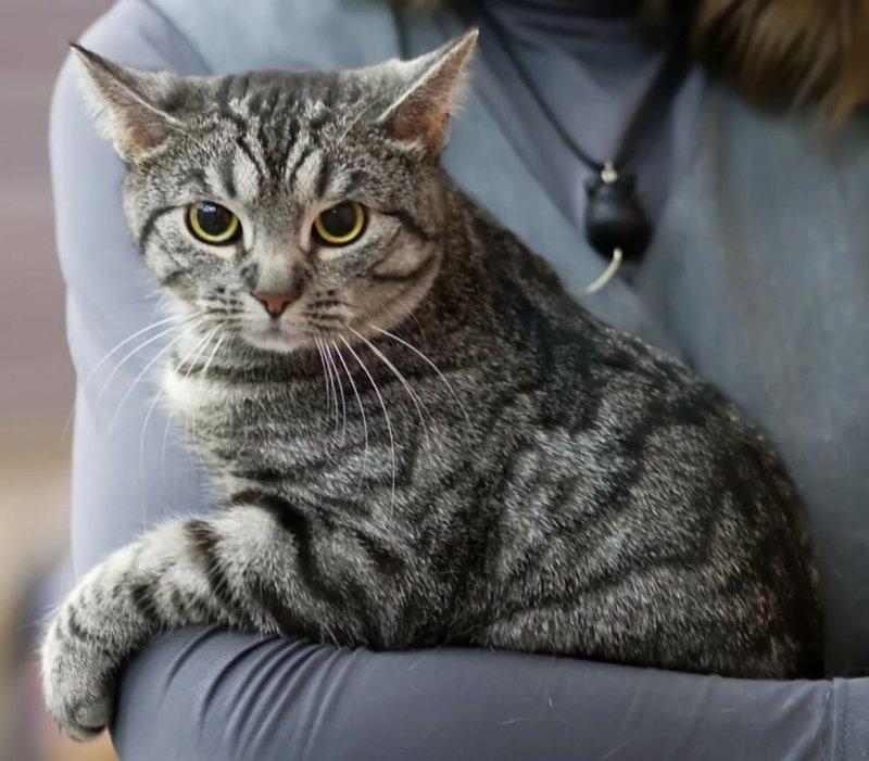 Самые популярные породы кошек в россии и мире