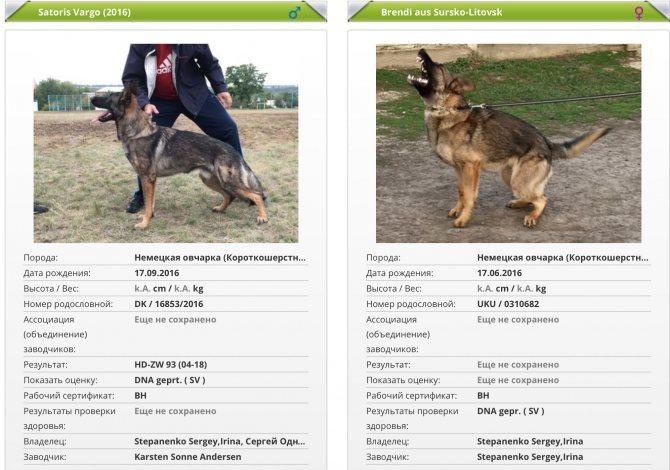 Как найти, какого размера вырастет щенок дворняги - ветеринарная клиника вет-дух