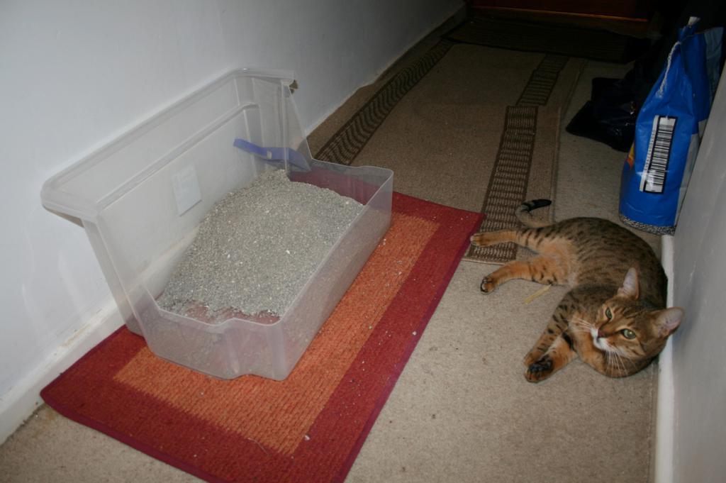 Как отучить кошку гадить в доме: практические советы