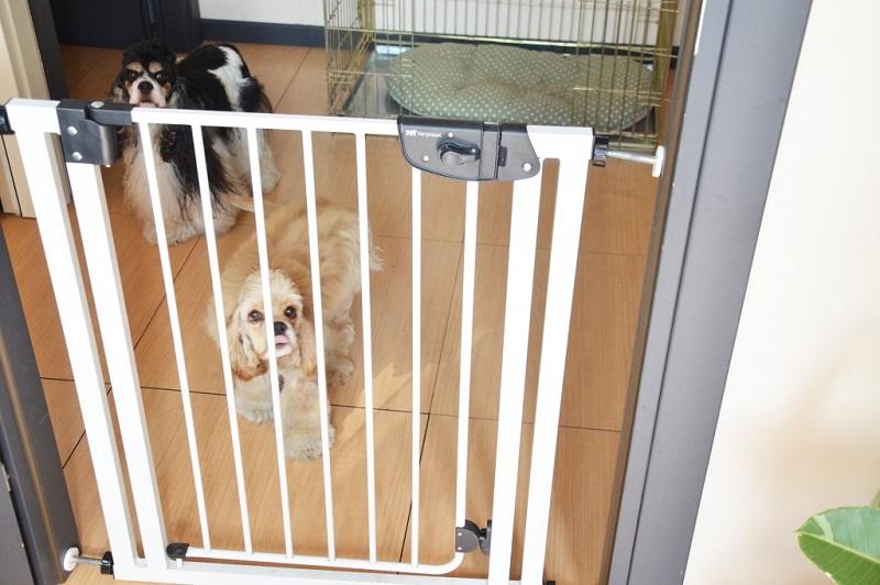 Барьер для собак своими руками для квартиры