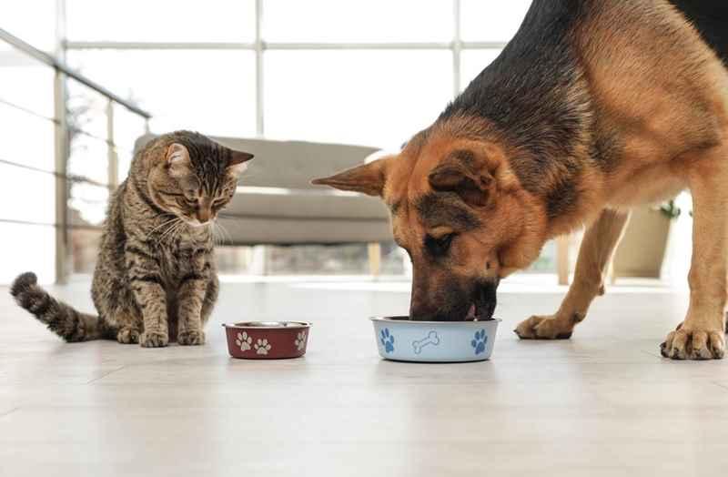 Можно ли кошек кормить сухим собачьим кормом