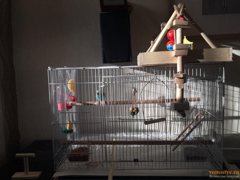 Клетка для волнистого попугая (37 фото): какой должен быть размер? нужно ли оборудовать зеркалом? как выбрать клетку для двух попугаев?