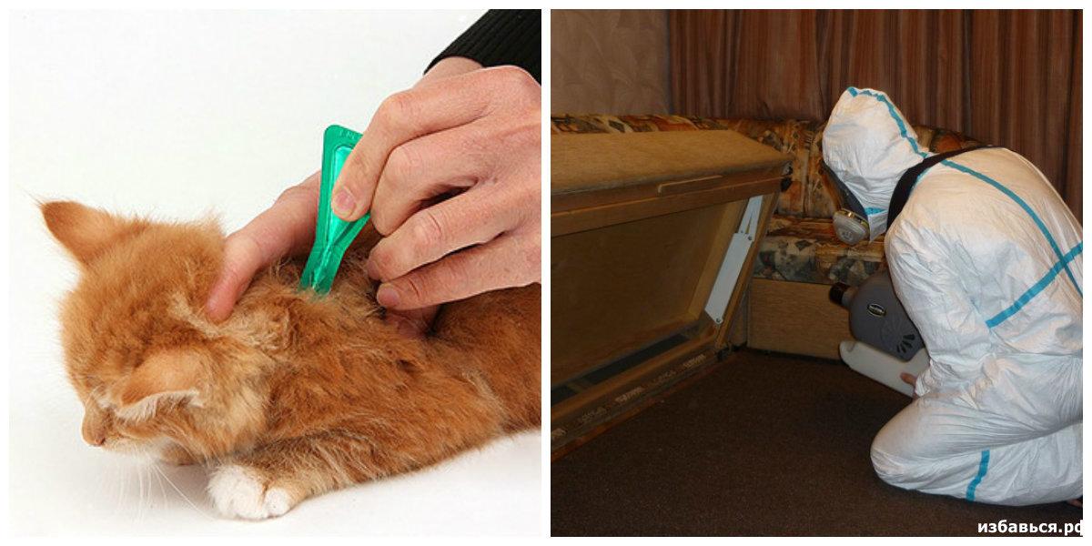 Капли от блох для кошек и котят: какие выбрать и как правильно использовать.