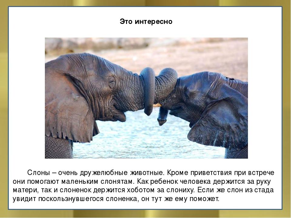 Фотоснимки и интересные факты о слонах - zefirka