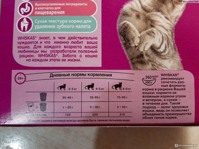 Кошку рвёт после сухого корма: что делать, возможные причины
