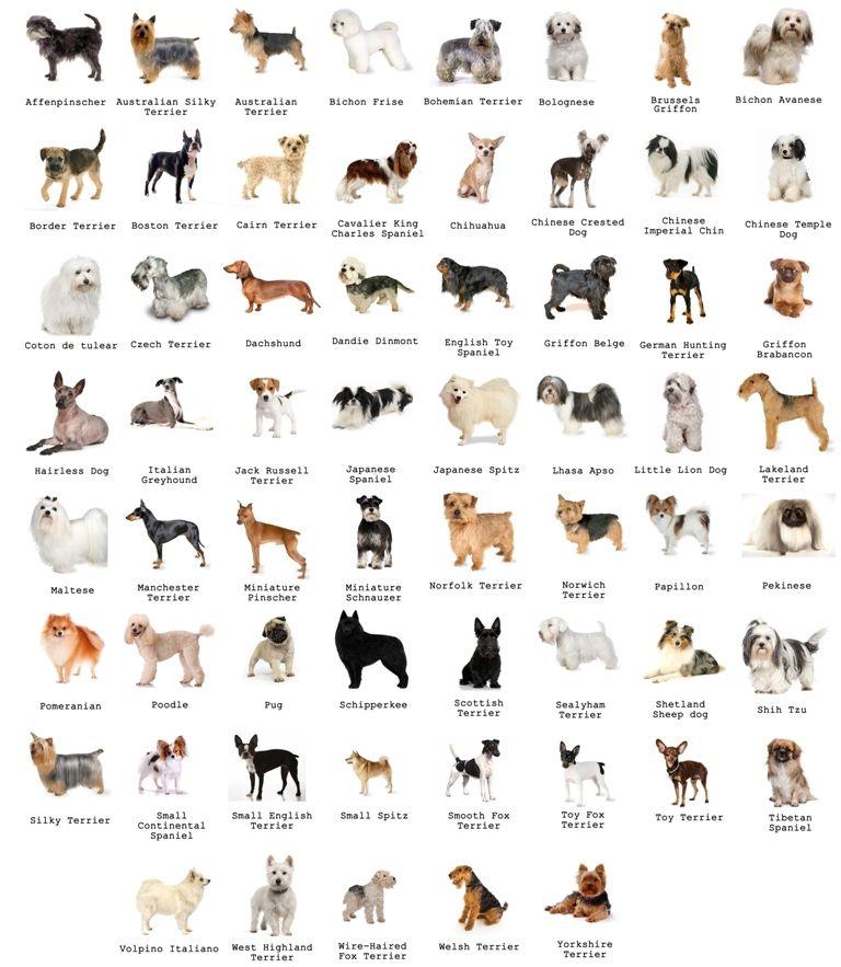 Определение породы собак по фото
