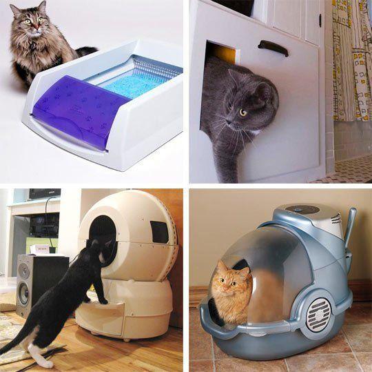 Как успокоить кошку в домашних условиях – делюсь личным опытом