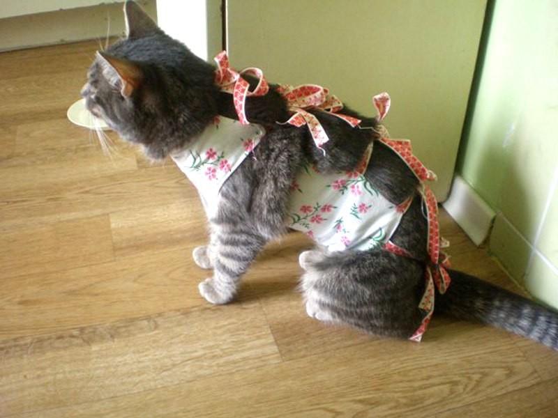 Попона для кошки после стерилизации: как надеть и завязать попону?