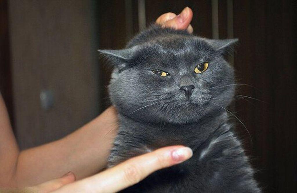 Как наказать кота — 5 «золотых правил» наказания