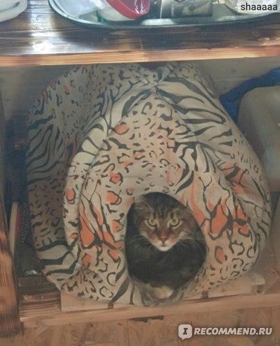 Как отличить мейн-куна от обычной кошки: 5 признаков породистости