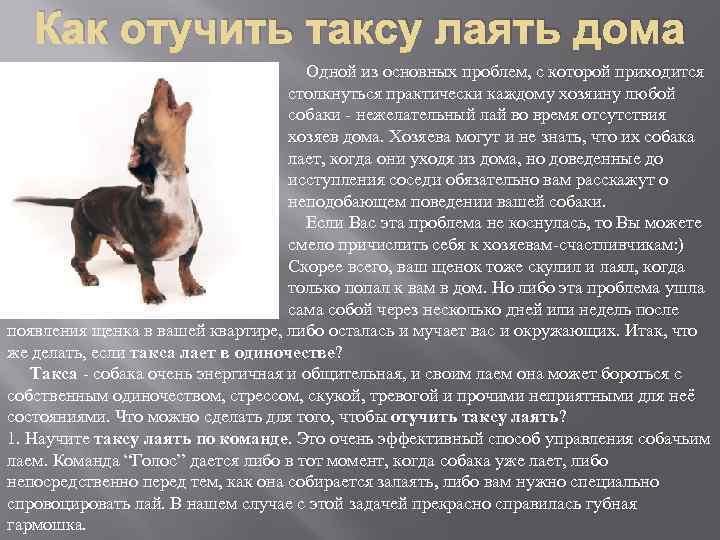 ᐉ почему овчарка роет ямы во дворе? - zoomanji.ru