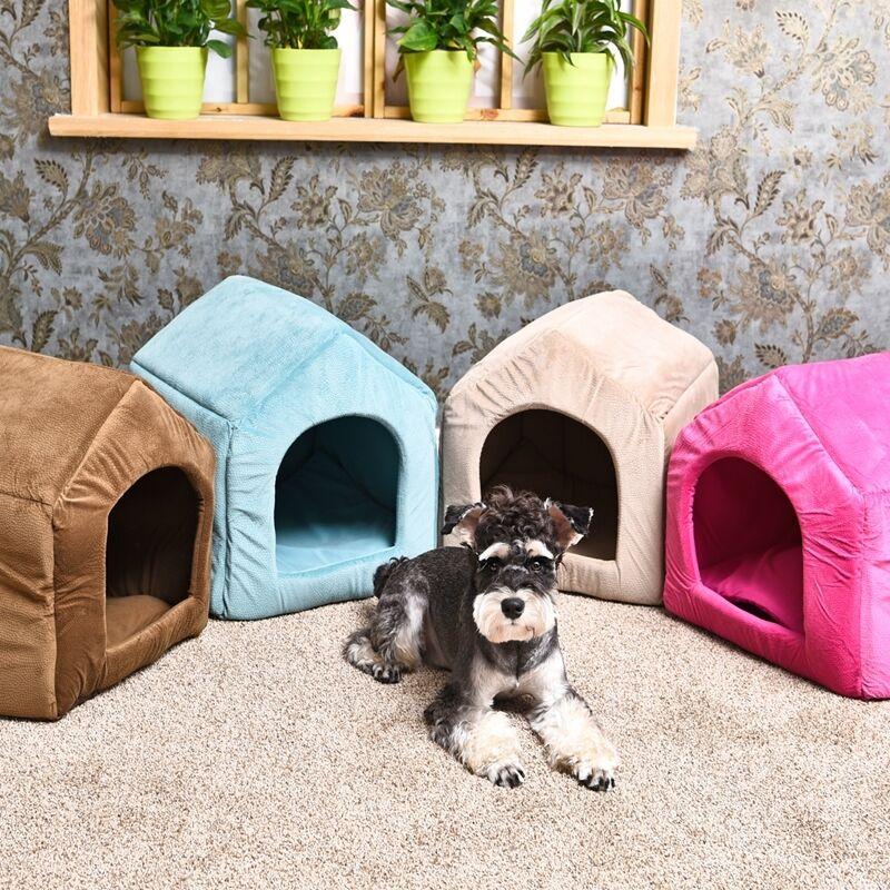 33 топовых породы собак для содержания в квартире