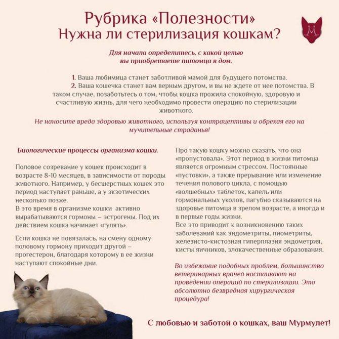 Сколько длится течка у кошек