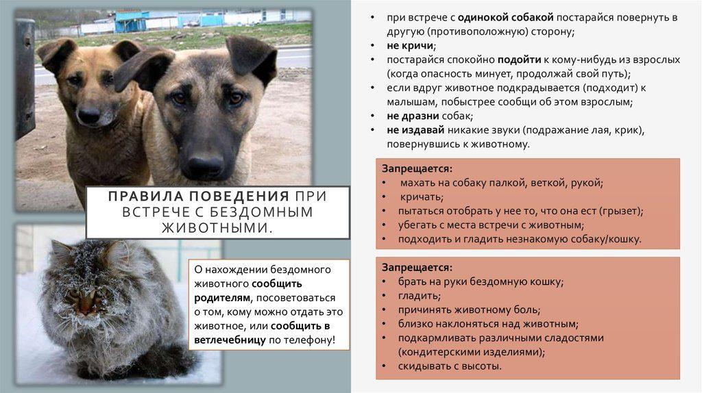Пес их знает: кто в ответе за бездомных собак на улицах города