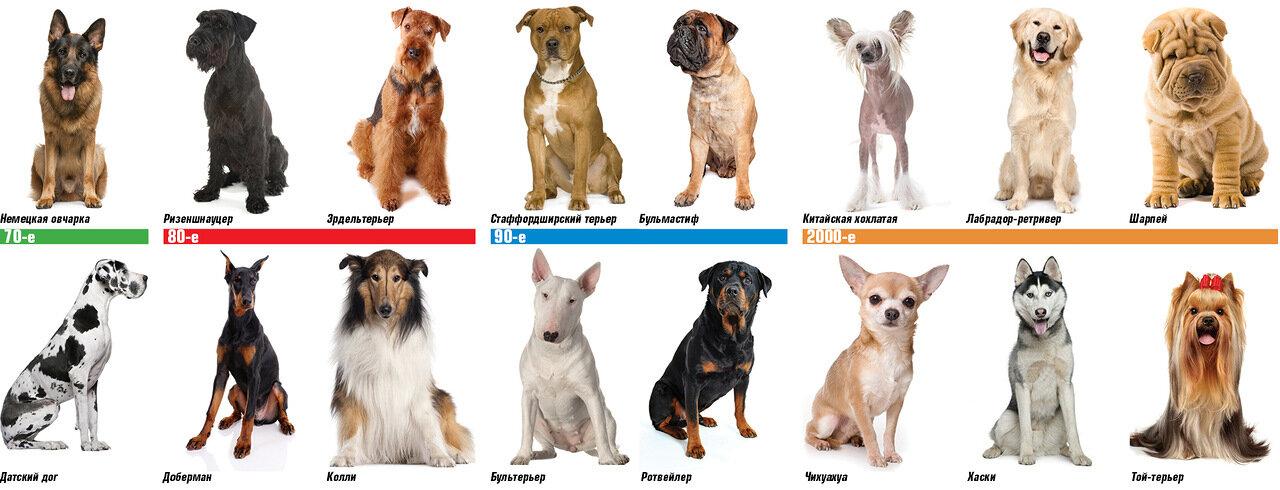 Как определить породу щенка по внешнему виду?