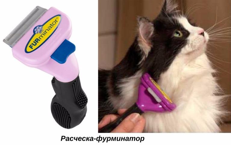 Почему кошка сильно линяет? рассказываем, как с этим бороться