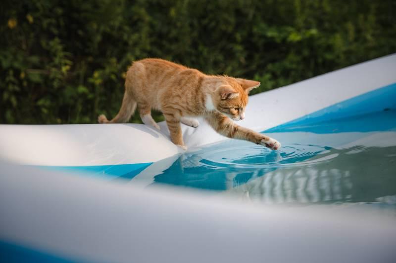 3 реальные причины, почему кошки боятся воды и как приучить их к купанию