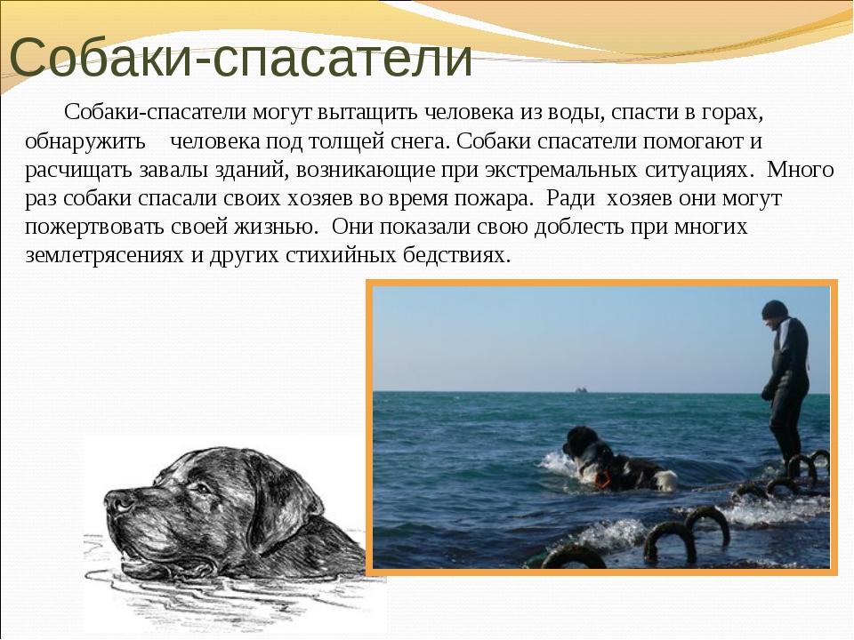 Собаки спасатели: последняя надежда в страшный миг