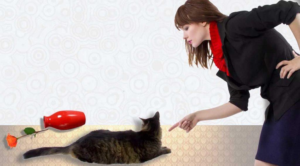Кот исправно ходил в лоток, а потом принялся гадить, где попало. что делать хозяину?