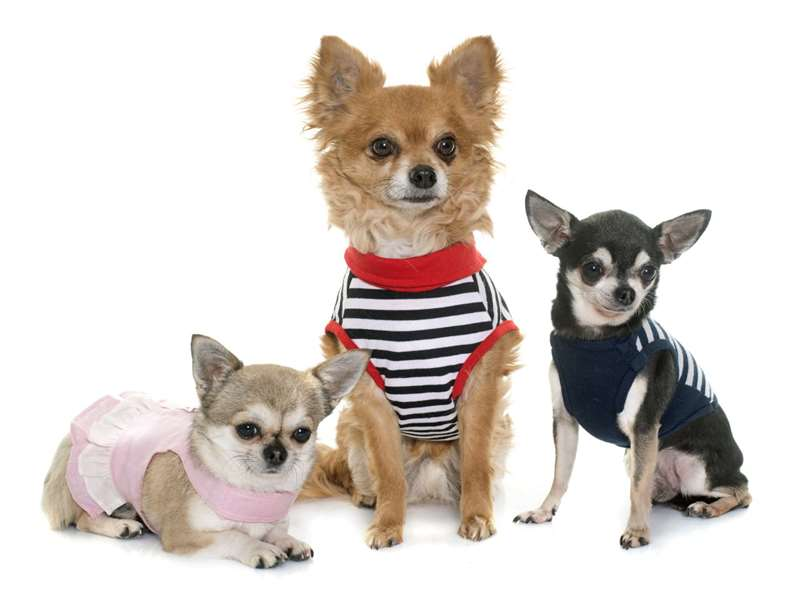 Одежда для собак, что предпочитают покупать владельцы своим любимцам